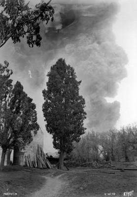 """Fumarolas del """"Paricutín"""", aspecto de los árboles y las chozas por la ceniza"""