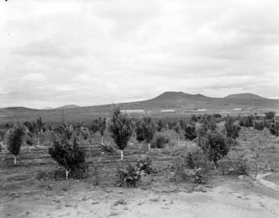 Plantas en campo de cultivo, paisaje