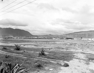 Magueyes en un terreno, paisaje