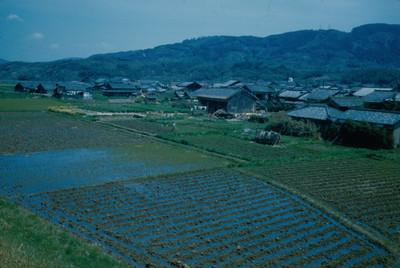 Casas habitacion junto a campo de cultivo