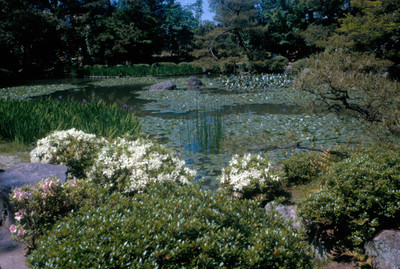 Laguna en jardin del santuario Heian