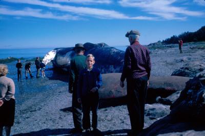 Gente observa a una ballena varada en la playa
