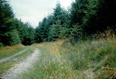 Camino en el bosque, paisaje