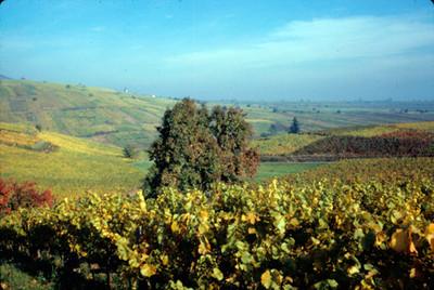 Pfalz campos de cultivo, panorámica