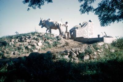 Campesino con una yunta de bueyes junto a un pozo