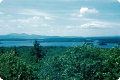 Bosque y laguna, paisaje