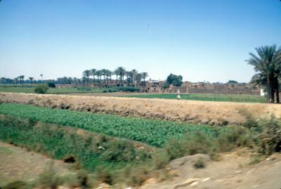 Campos de cultivo, panorámica