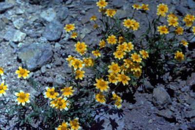 Conjunto de flores amarillas, acercamiento