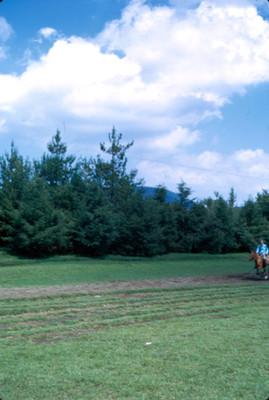 Excursionista a caballo en el bosque