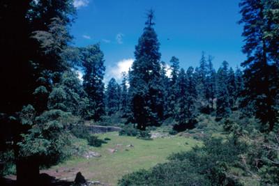 Bosque de