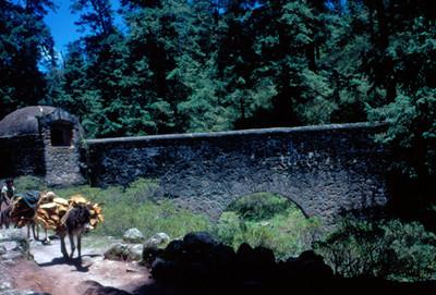 Niño con recua traslada leña, al fondo un acueducto