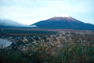 Volcan Pico de Orizaba, zona boscosa y niebla