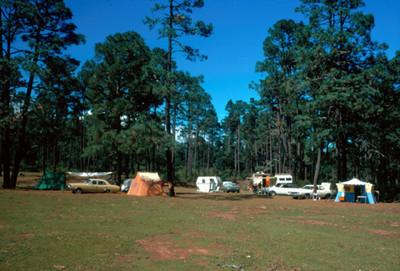 Campamento en medio de un bosque