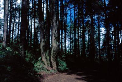 Camino entre los arboles de un bosque