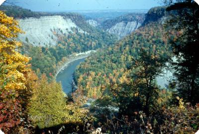 Vista paniramica de rio en zona boscosa