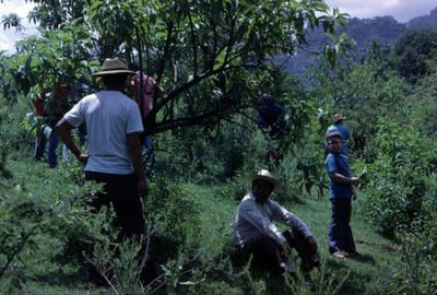 Personas entre vegetación en Amatlán