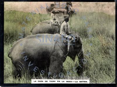"""Hombres sobre elefantes en """"la batida"""" durante """"la caza de tigre en la India"""""""