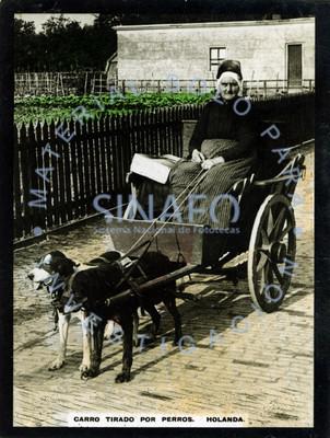 """Mujer abordo de un """"carro tirado por perros"""""""