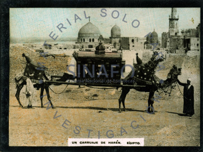 """Hombres junto a camellos que llevan """"carruaje de harén"""""""