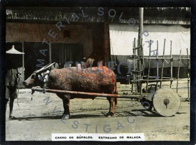 """Hombre junto a su """"carro de búfalos"""" en una calle de """"Malaca"""""""