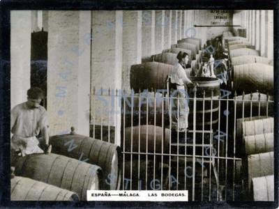 """Trabajadores en interior de """"bodegas"""" de vino"""