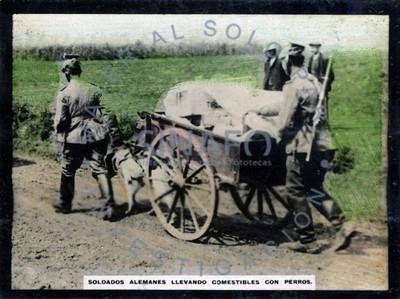 Soldados alemanes llevando comestibles con perros