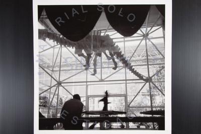 Dinosaurio en exhibición
