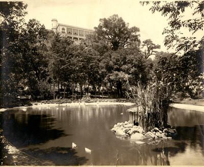 Pequeño lago para patos