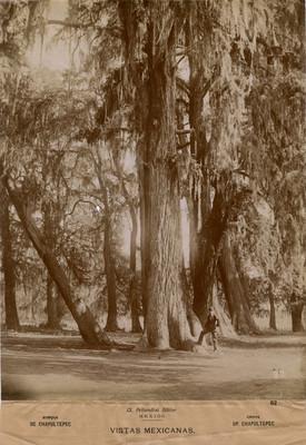 Bosque de Chapultepec, Crove of Chapultepec