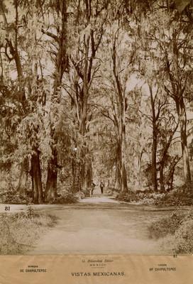 "Hombres en un camino del ""Bosque de Chapultepec"""