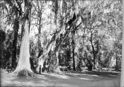 Bosque de Chapultepec, la parte más poblada de árboles