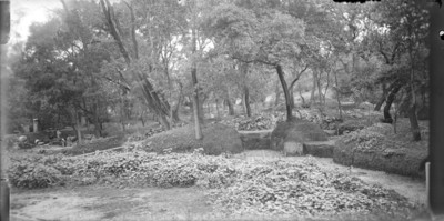 Trabajadores construyen caminos en el Bosque de Chapultepec