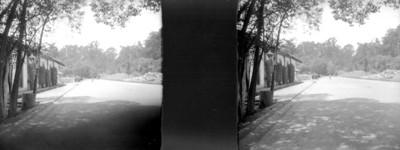 Calzada en Chapultepec, estereoscópica