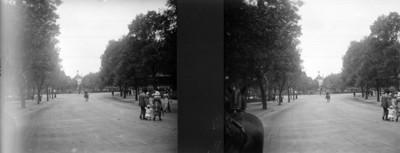 Tramo de la gran avenida en Chapultepec, estereoscópica