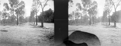 Construcción de la calzada para peatones en el Bosque