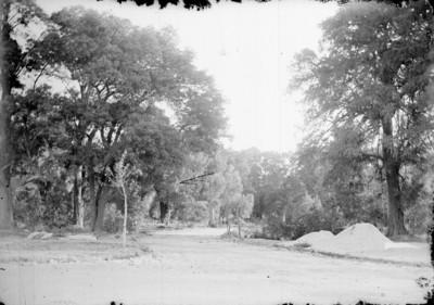 Camino en Chapultepec, paisaje
