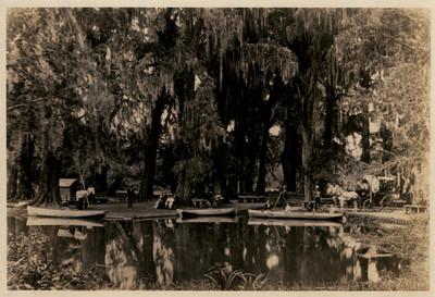 Pequeño lago en el interior del bosque