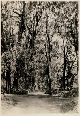 Bosque de Chapultepec, reprografía