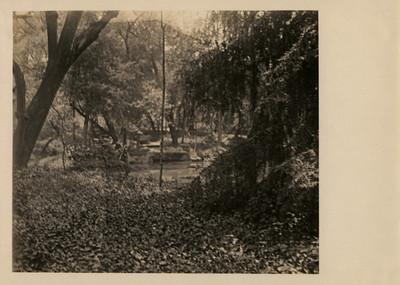 Lago del vivero en el Bosque de Chapultepec
