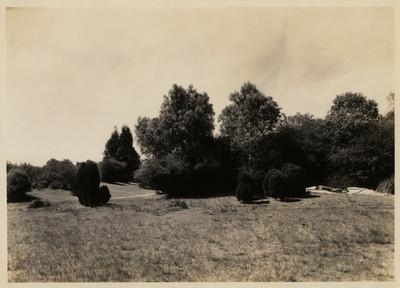 Árboles y arbustos cerca del prado al Poniente del restaurante