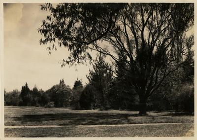 Grupo de árboles cercano al cerrito en el Bosque de Chapultepec