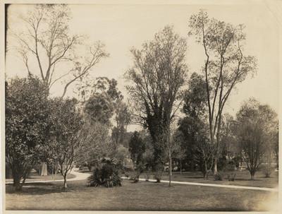 Prado norte en el Bosque de Chapultepec