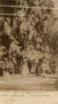 Bosque de Chapultepec. Grove of Chapultepec. 50