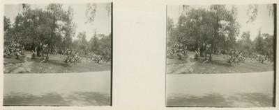 Jardines y calzada en Chapultepec, estereoscópica
