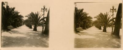 Avenida con palmeras en Chapultepec, estereoscópica