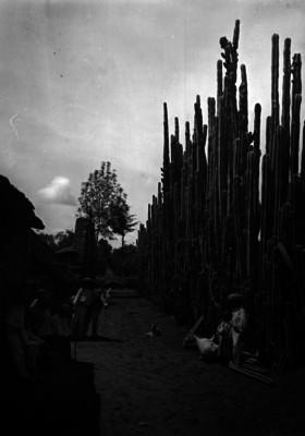 Adultos y niños indígenas junto a chozas y plantas cactáceas, retrato de grupo