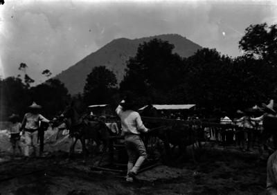 Hombres jalan mulas durante la construcción de una calle