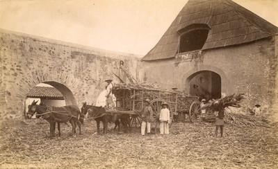 """Peones en hacienda de beneficio de caña de azúcar, """"Sugar Mill. Cuautla"""""""