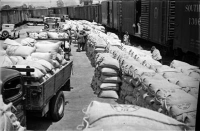 Camiones de carga transportando articulos de primera necesidad