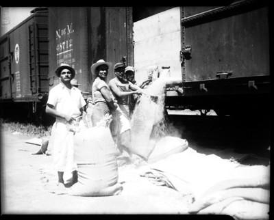 Hombres llenando costales de grano de un ferrocarril